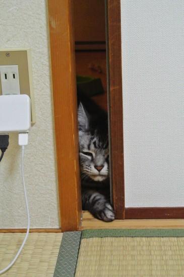扉を開けようとする猫2
