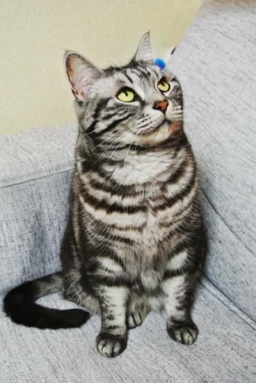 肩幅に前足を開く猫