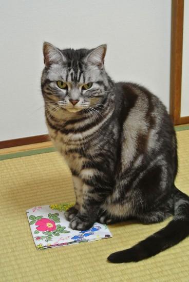 六花亭の袋に乗る猫