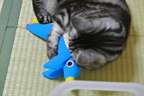 ペンギンのおもちゃで遊ぶ猫