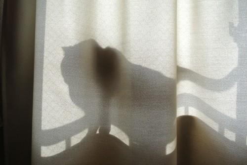 猫の影がうつるカーテン
